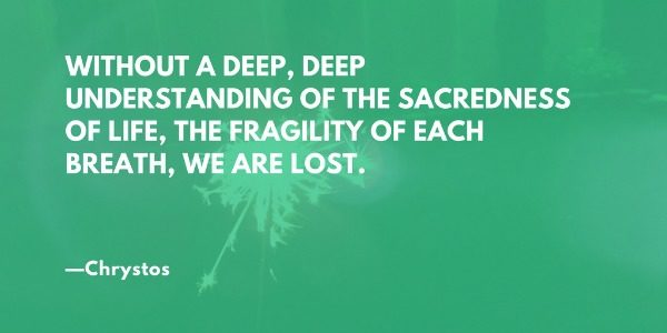 Without a deep, deep understanding of the sacredness of life, the fragility of each breath, we are lost. —Chrystos