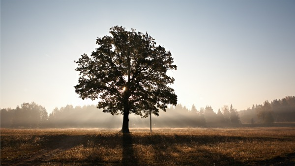 A lone large tree in the foreground. In the backround, daybreak and sharp morning light.