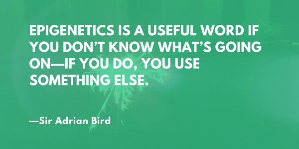 Epigenetics is a useful word if you don't know what's going on—if you do, you use something else. —Sir Adrian Bird